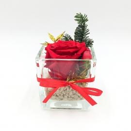 NATALE ETERNO: rosa rossa stabilizzata natalizia