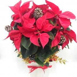 STELLA LUMINOSA: stella di Natale con pigne e decorazioni