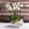Composizione 3 orchidee bianche