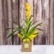 Pianta guzmania con fiore colorato