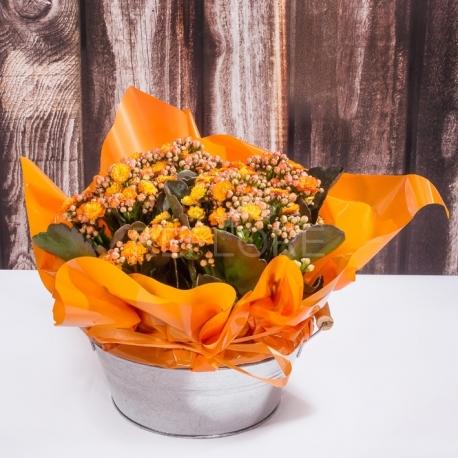 Giardinetto calancole arancio