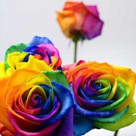MAZZO DI 11 ROSE RAINBOW + 7 GIRASOLI