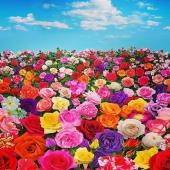 Amiamo i fiori, i colori e i profumi... E amiamo condividerli con voi... li portiamo direttamente a casa vostra!!! 🌺🌸🌼🌻 www.reflore.it